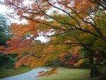 2006_11_25_Kyoto_Koyo__203__rs