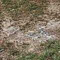 Roche mère calcaire sur la parcelle de la Croix Boissée