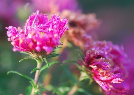 aster_givr_0001