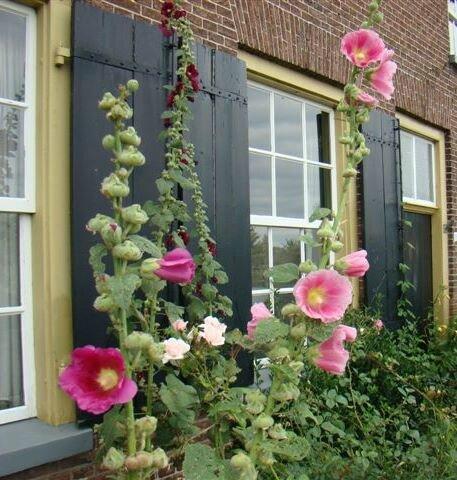fenêtres et volets peints + façades (64)