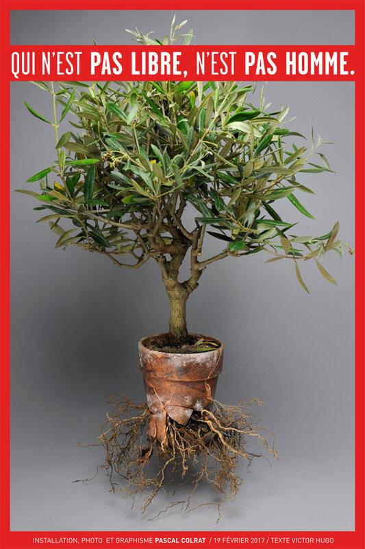 arbre_libre