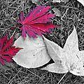 Nantes aux couleurs d'automne