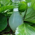 Nomades : eau de tréant au pamplemousse
