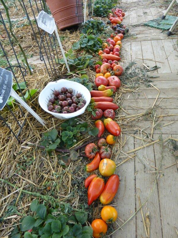 29-tomates du jour (2)
