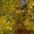 2009 10 31 Depuis le haut d'un Fayard (hêtre), vu sur le branchage et les feuilles d'automnes (2)