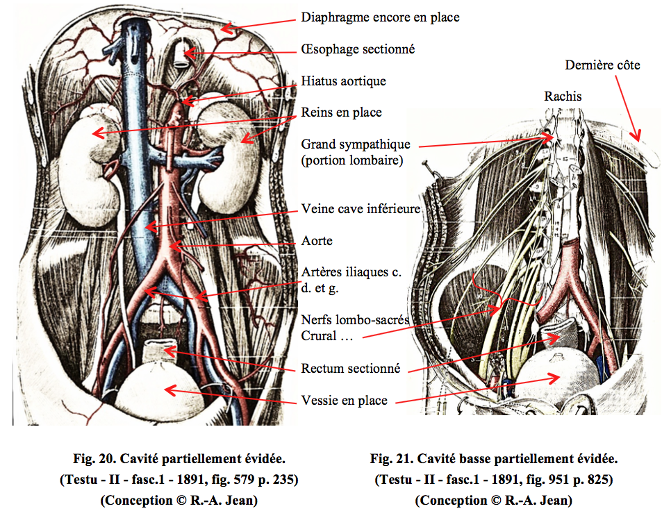 ANATOMIE - ABDOMEN - II - Histoire de la médecine en Egypte ancienne