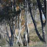 La forêt dévoilée