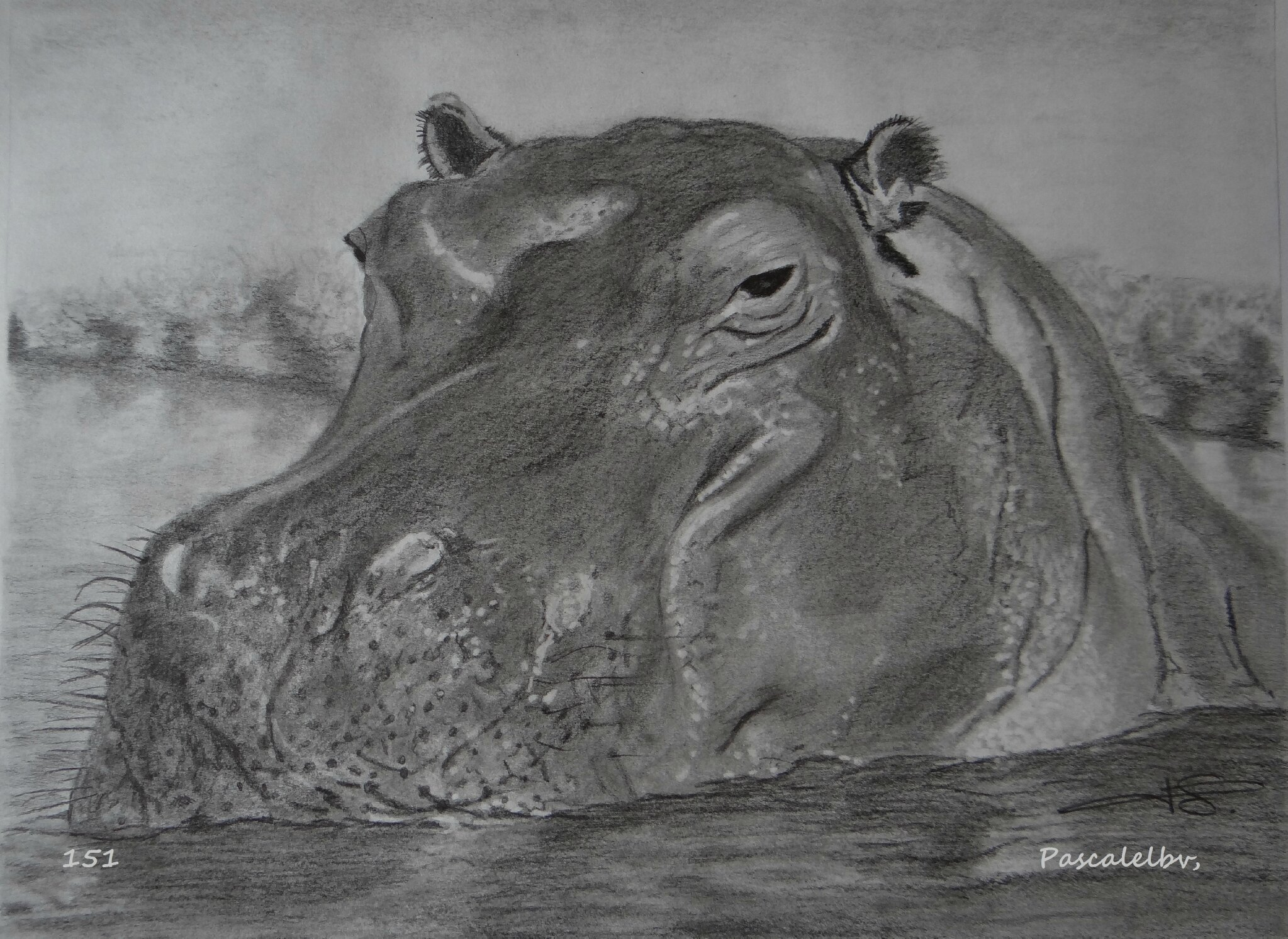 151 - L'hippo 30X40 - NON DISPONIBLE