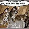 Humour - les chats se débrouillent avec internet...