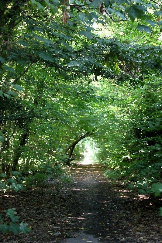 2-chemin vert, forêt_1195