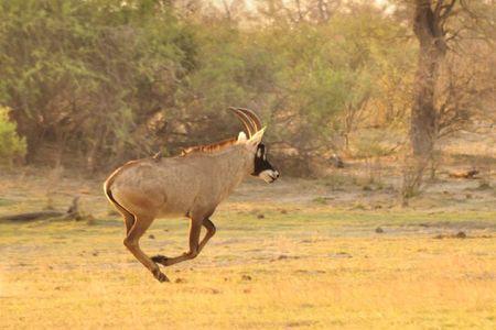 Namibie (20)