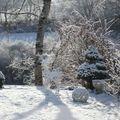un cerf en hiver