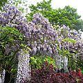 Giverny : le jardin d'eau