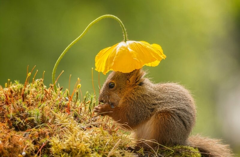 animals-enjoying-the-beautiful-spring-spring-is-coming-12