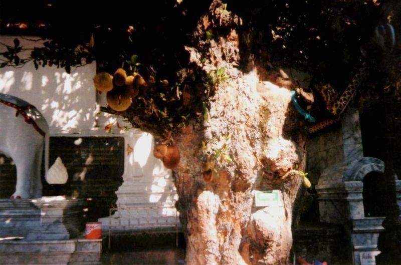 Wat Doi Suthep jaquier