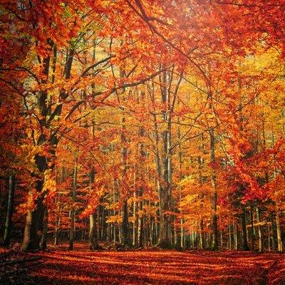philippe-sainte-laudy-novembre-rouge