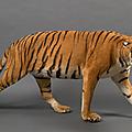 Tigre d'asie (panthera tigris)