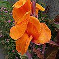 Fleur orange 3