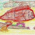 Raor ou poisson-peigne, l'un des meilleurs de Méditerrannée