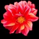 fleurs-11 (1)