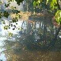 rêve d'étang