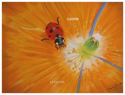 coccinelle II OF