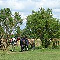 RandoBaie 2014 - balade équestre sur la piste des JEM (241)
