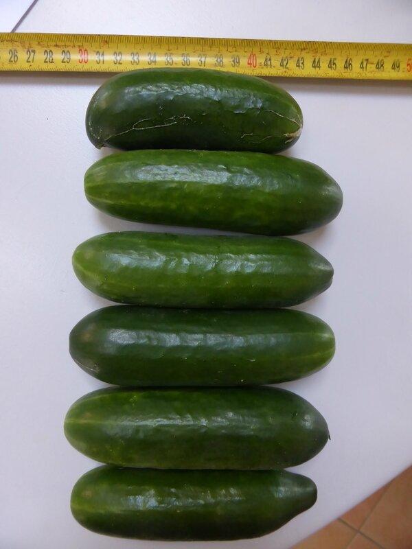 6-concombres (1)