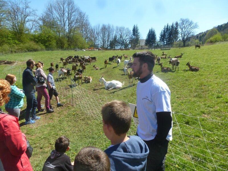 K les chèvres de Monsieur Seguin