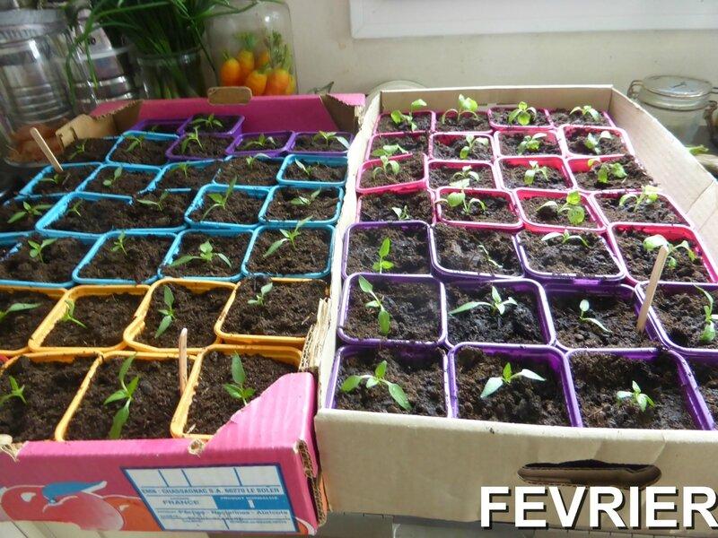 15-rempotage poivronns aubergines- (19)