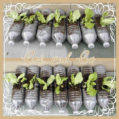 Planter de la salade
