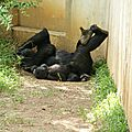 Smithsonian national park - ZOO (108)