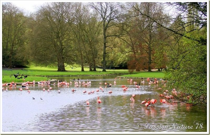 Les flamants roses passion nature 78 for Parc sauvage yvelines