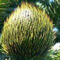 Texture piquante pour dame nature ...
