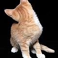 Bonjour, je suis photographe professionnel de chats sur tissus qui ne regardent pas l'objectif...