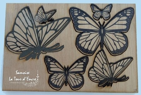 Samoise papillons 1