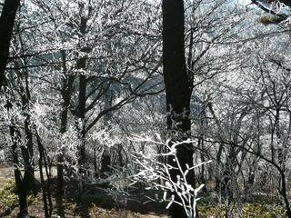 neige_arbres