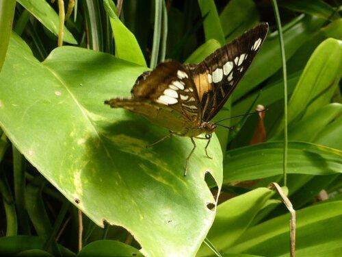 jardin papillons vannes
