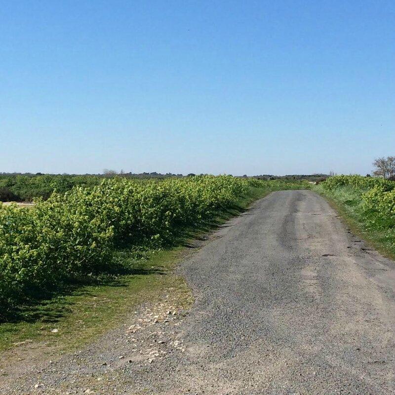 route dans les marais