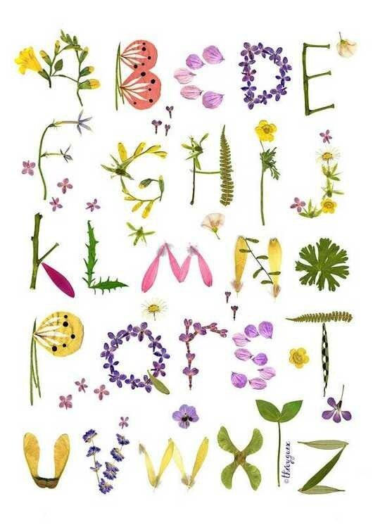 herbarium-alphabet-flowers