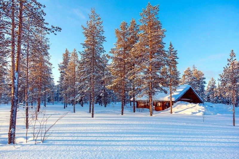 paysage-neigeux-de-forêt-d-hiver-avec-la-petite-loge-en-bois-82815822
