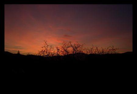 arbre_de_nuit