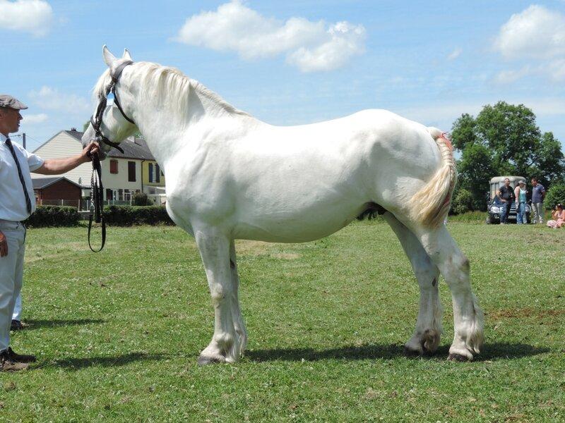 Duchesse de Irles - 11 Juin 2017 - Concours d'élevage local - Bernaville (80) - 5e (Suitées)