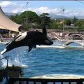 orque au Marineland