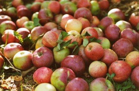 Tisane Aux Pommes Aux vertus Apaisante
