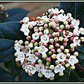 Fleur de Laurier Tin 120215