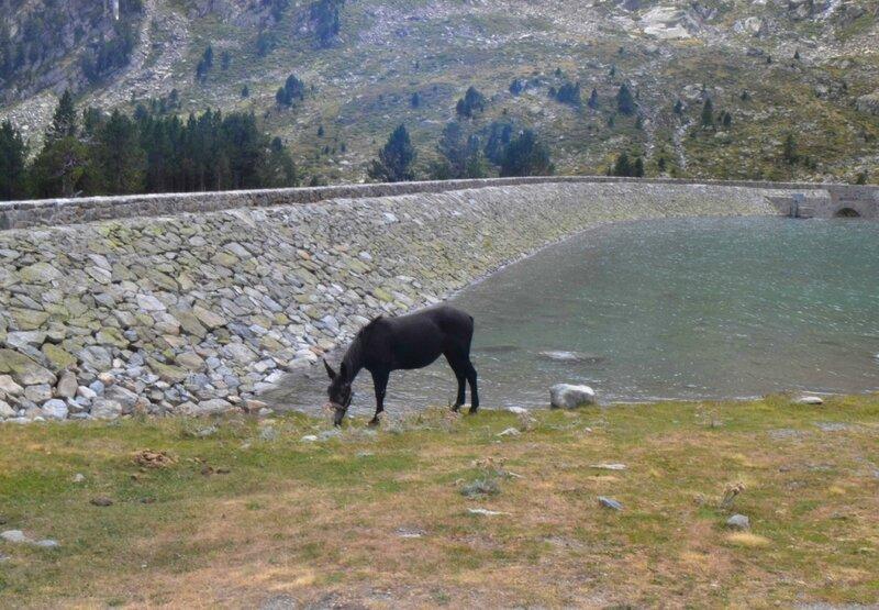 lac aubert3
