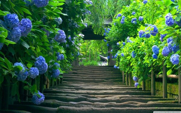 japanese_garden___stairs-wallpaper-1440x900