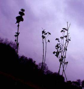 AnnePoncet_Le_bruit_des_vagues_Photo2011_008_Fleurs_s_ches_vue1
