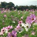 jachere florale